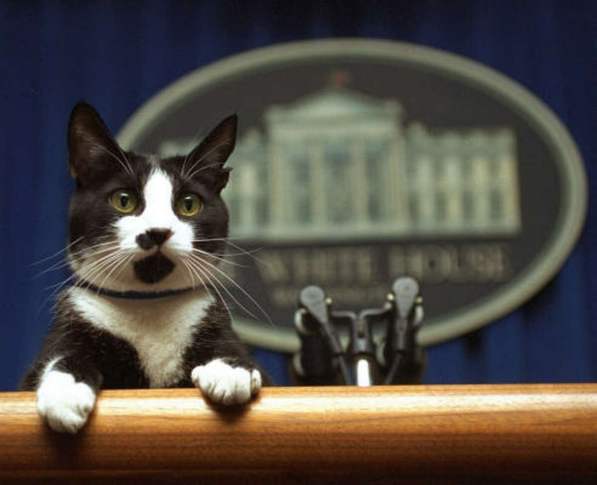 Socks the cat peers over the podium in the White House briefing room in this March 19, 1994, file photo.