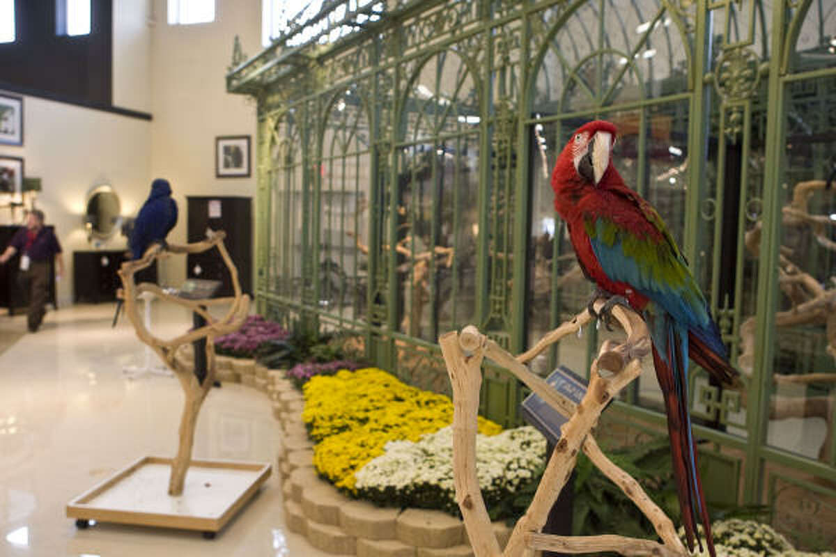 A parrot occupies a prime spot outside the aviary at Gallery Furniture on Interstate 45 North during the second phase of the store's reopening on Thursday.