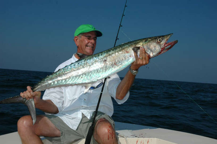Considered severely overfished barely 20 years ago, king mackerel populations in the Gulf of Mexico have, federal managers say, recovered under conservative fishing regulations. The number of kings in the Gulf may be four times higher today than in the 1980s. Photo: Shannon Tompkins, Houston Chronicle