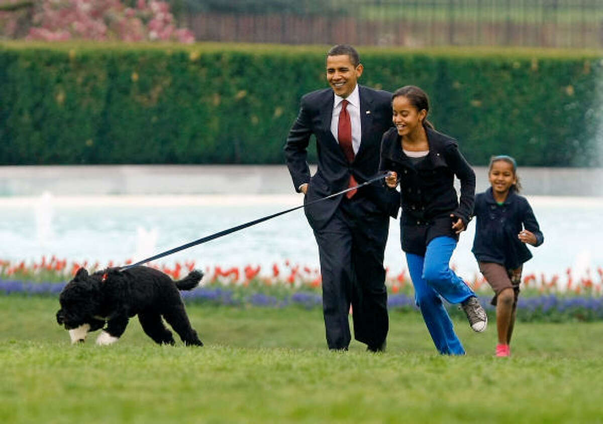President Obama fulfilled a campaign promise to his daughters by getting them a dog. Bo, who came from a Texas breeder of Portuguese water dogs, bounced into the First Family's lives in April.
