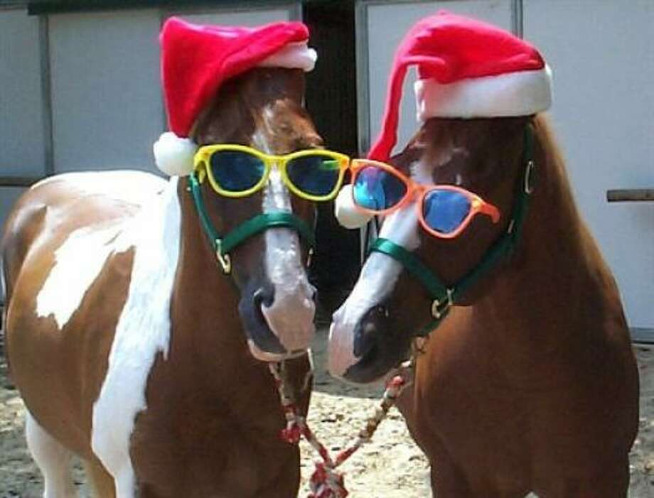 MAKING SPIRITS BRIGHT: JoJo and Sam are decked out for the holidays. Photo: Bodiesmom, PetsHouston.com
