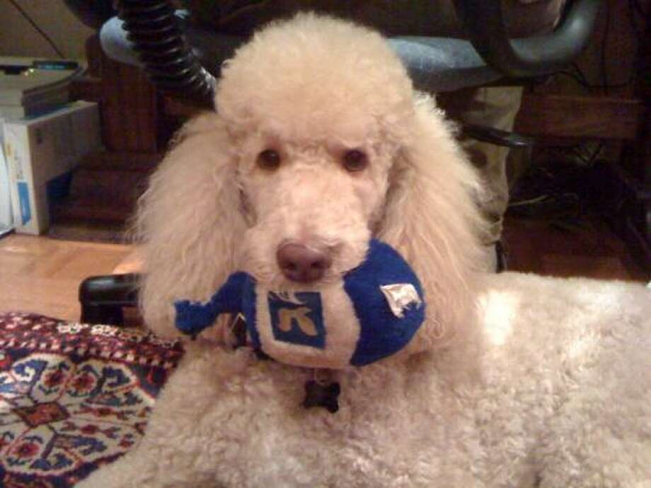 A dreidel for the dog, because you can't leave out your pets. Photo: PetsHouston.com