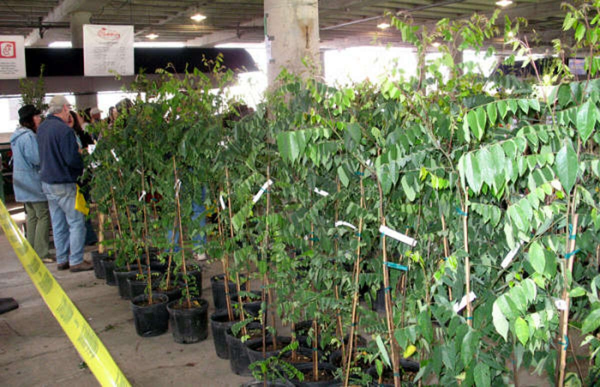 Urban Harvest Fruit Tree Sale, Rice Stadium, Jan. 17, 2009.