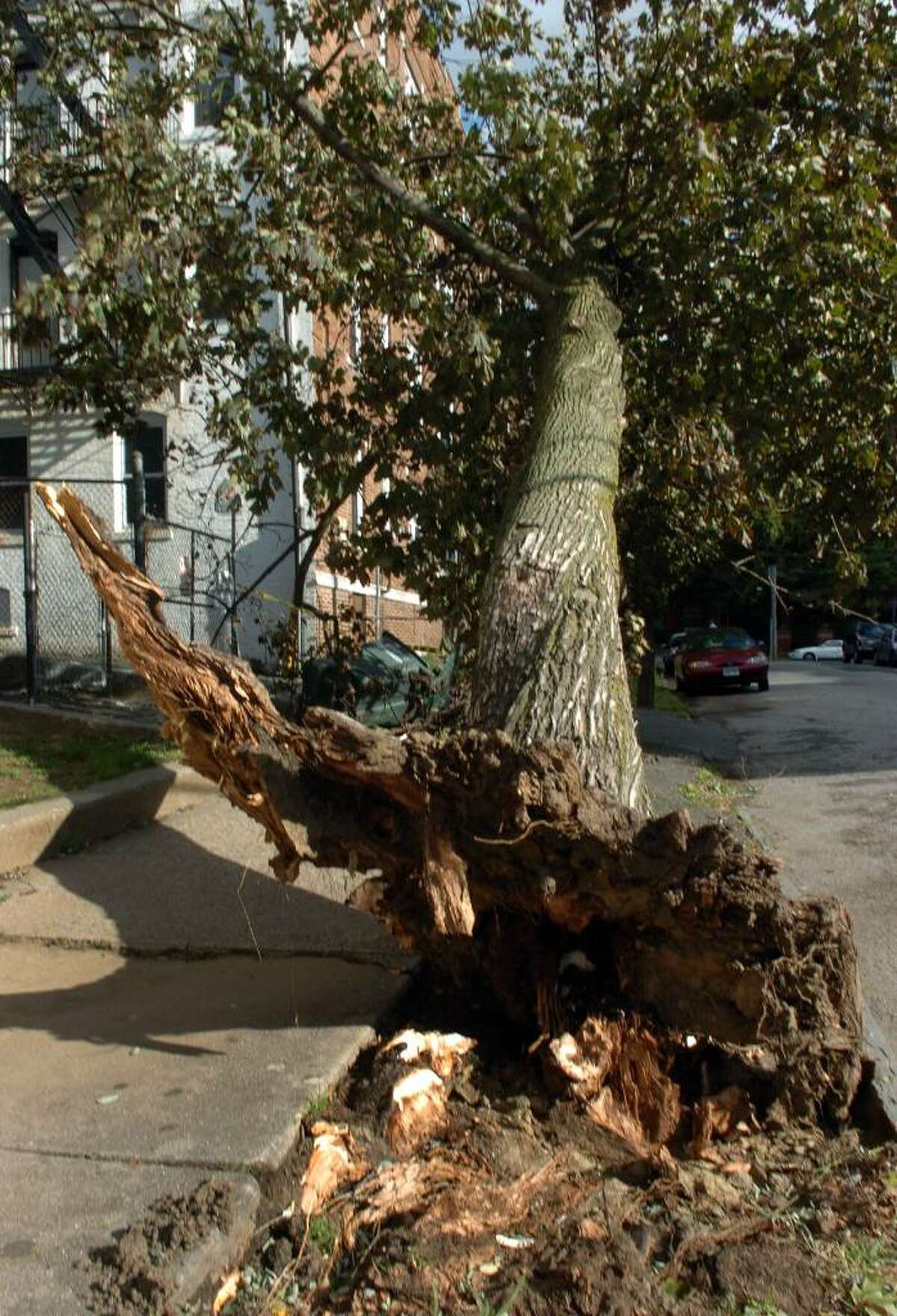 Severe winds downed this tree along Sanford Place in Bridgeport, Conn. on Wednesday Oct. 07, 2009.