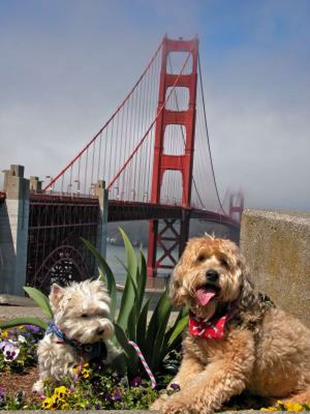 Bonnie and Darby relax after a morning stroll across the Golden Gate Bridge in San Francisco.
