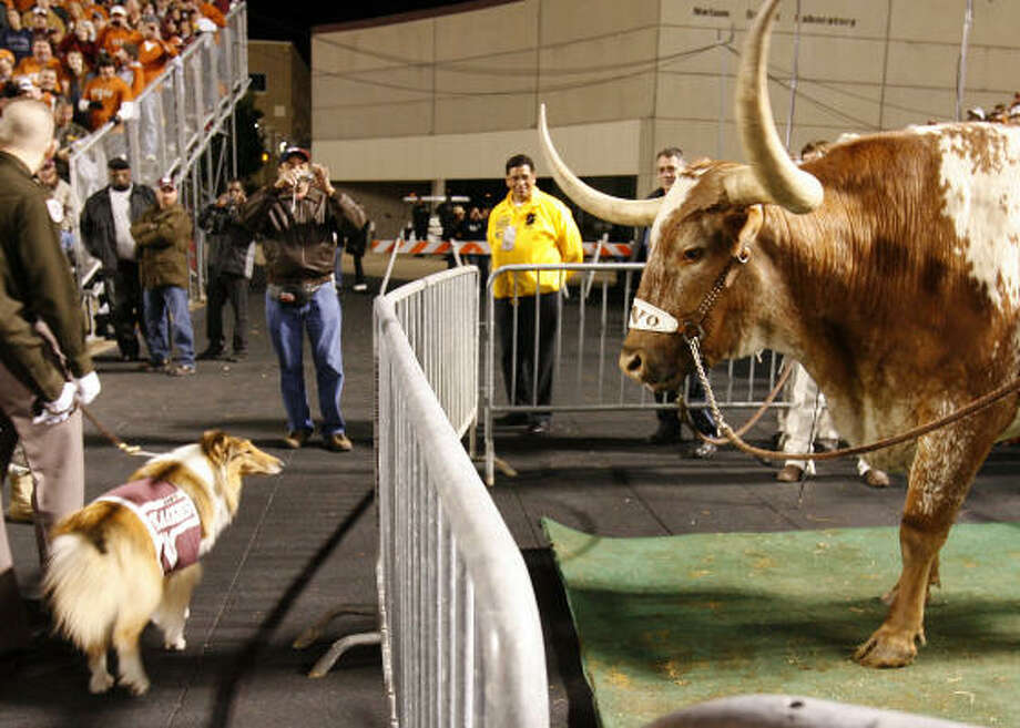 Bevo stares at Reveille during the first half. Photo: Karen Warren, Chronicle