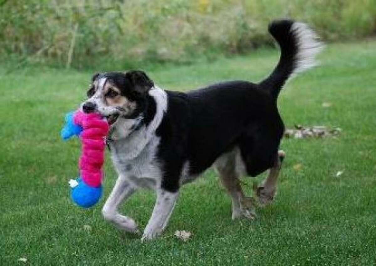 Squiggles: The new toys from Kong are stretchy, floppy and squeaky. Choose a donkey, teddy bear, elephant or bunny for a dog to adopt or attack. Available in three sizes. $4.49 to $9.99, pet supply outlets