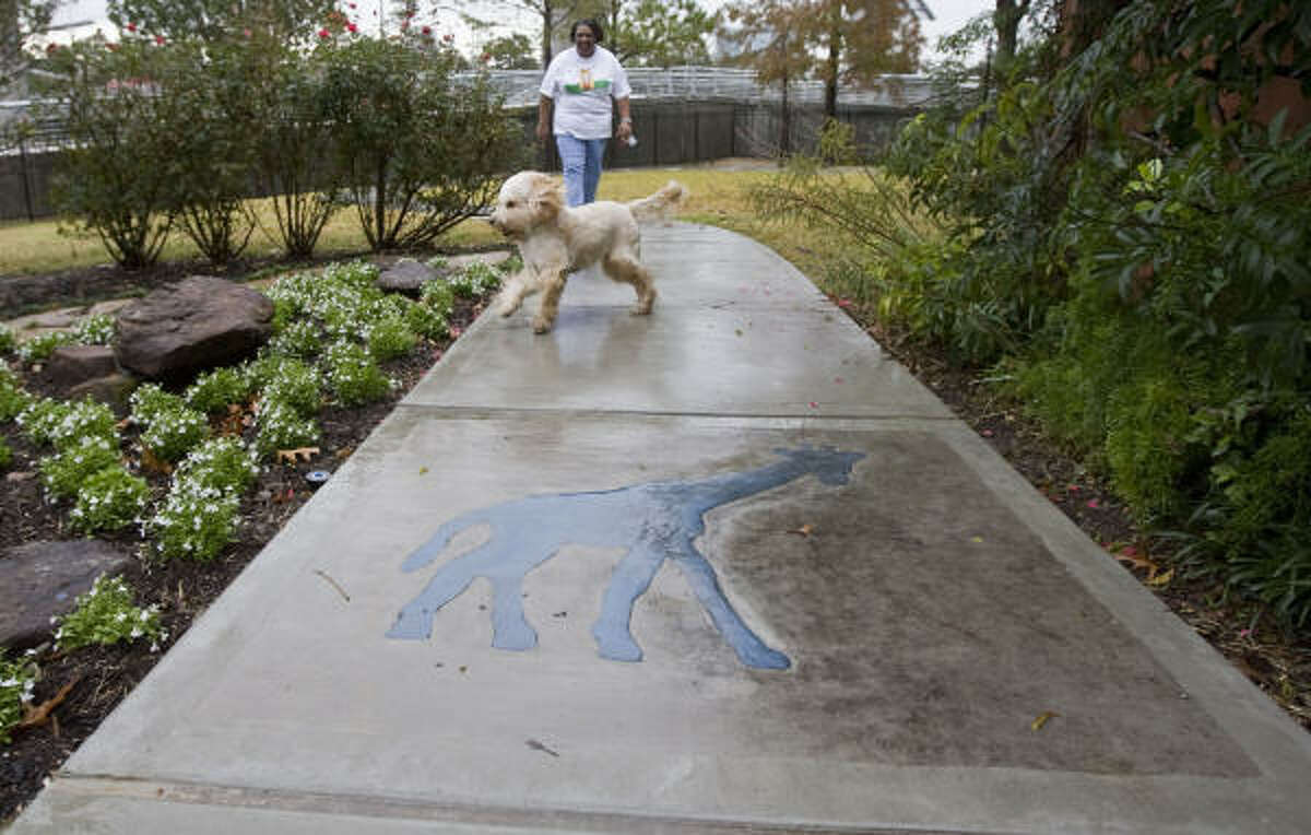 """The Ronald McDonald House dog """"Mogie"""" a labradoodle and house manager Sandra Gordon take a walk at the"""