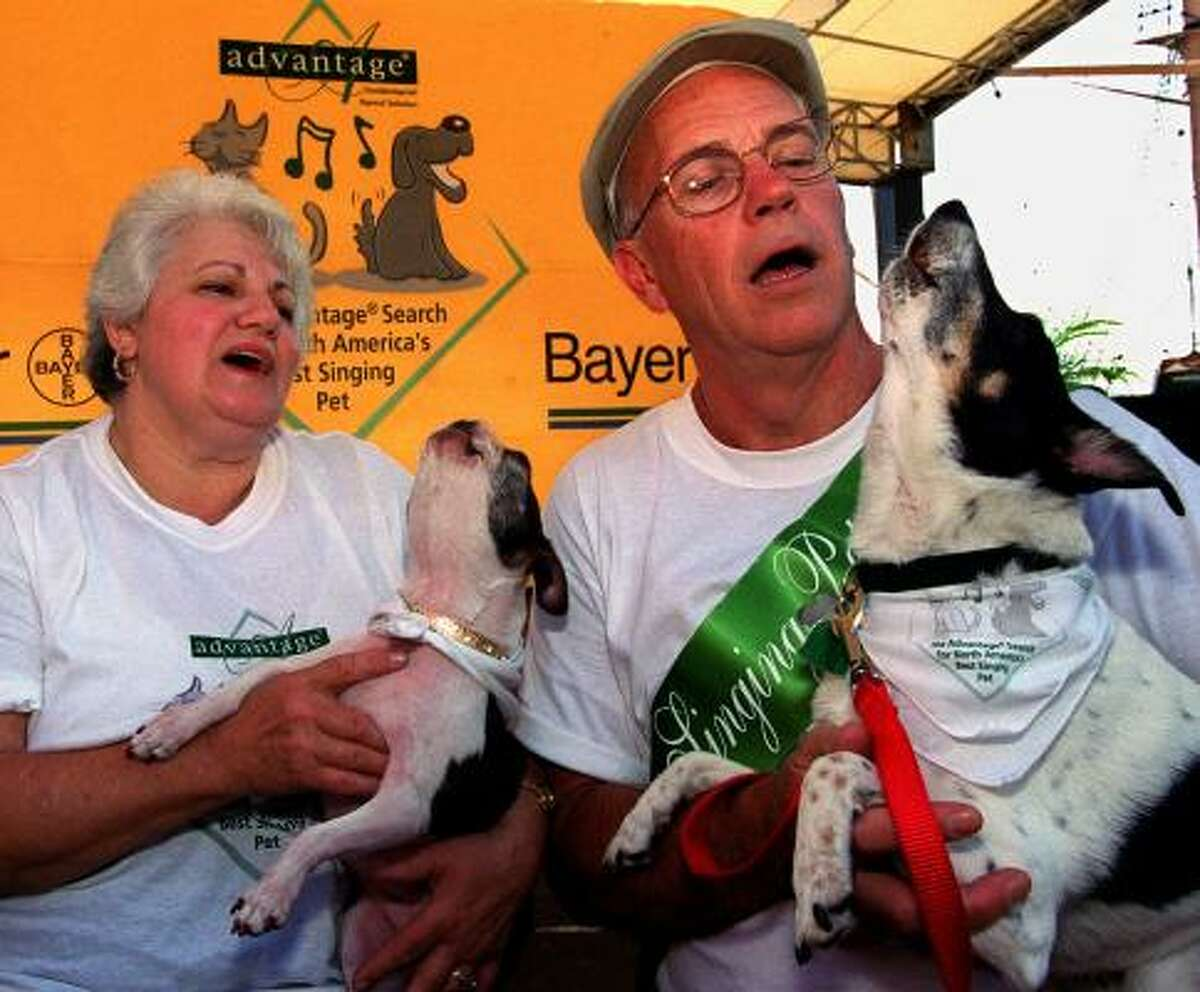 Annette Packard of Kansas City, Mo., with her Boston Terrier Suzie, joins Bill Hagemann of San Francisco and Cecil, a 7-year old Fox Terrier, for a quartet. What's your pup's talent? Share your dog pics.