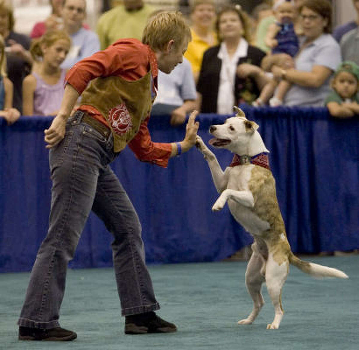 C. Cappel of Dallas, high-fives her dog, Shrek the Ogre Achiever, during a dance demonstration. What's your pup's talent? Share your dog pics.