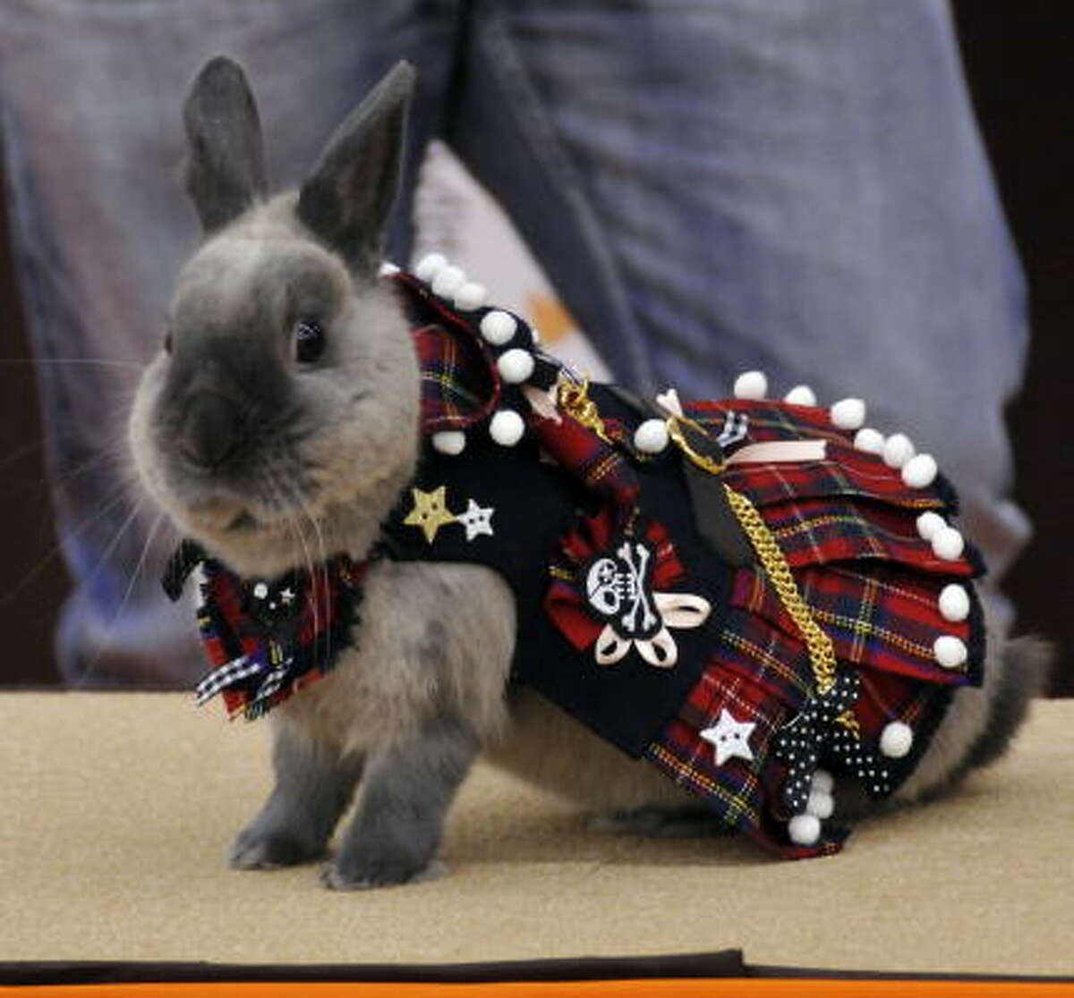A rabbit wearing a tartan suit competes during a rabbit fashion contest Sunday at the Rabbit Festa in Yokohama city in Kanagawa prefecture, suburban Tokyo.