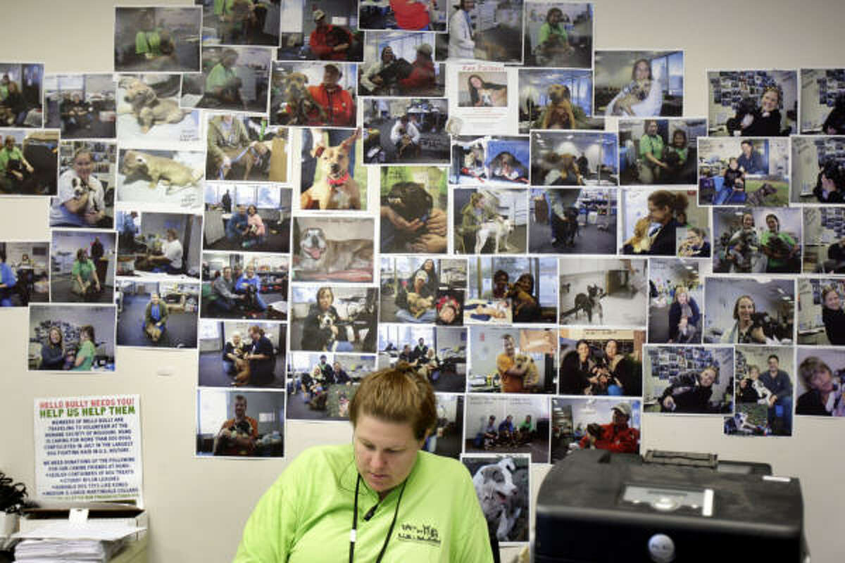 Julia Kelly works at a desk under photos of adopted dogs that were seized as part of the dogfighting raid. An emergency shelter was set up to house the pit bulls. Over 400 dogs were confiscated during the multi-state raid.