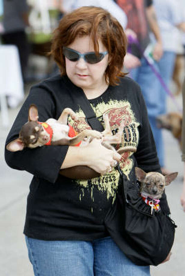 Darla Reasner of Montgomery carries her chihuahuas Jack, left, and Phoebe , right, during the 3rd Annual Kingwood Barktoberfest at Kingwood Town Center Park in Kingwood. The event benefited local shelters and animal rescue groups.  Both her dogs were rescues. Photo: Melissa Phillip, Chronicle