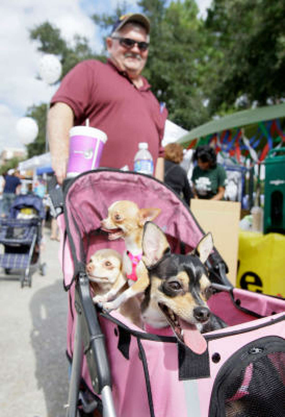 Pixie, Bella, and Tinkerbelle ride in a pet stroller as they are pushed around by owner Don Davis of Cleveland.