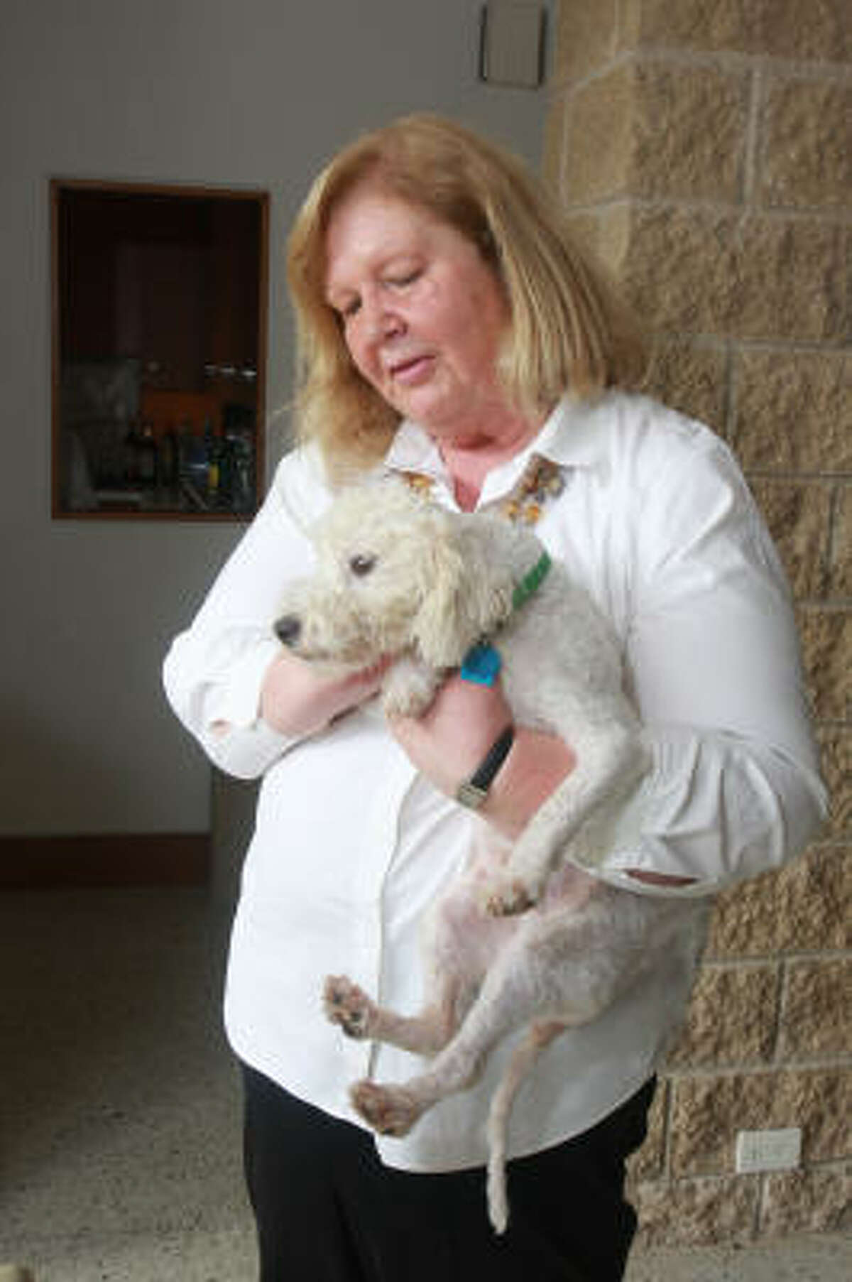 """""""I have been rescuing animals all my life,"""" said Wetmore, who is holding Wilson, a Bichon mix found living under a house with horribly matted hair. Wetmore describes him as a gentle soul."""