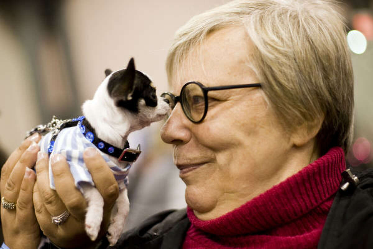 Mojito, a Chihuahua, sniffs spectator Maria-Liisa Lydon. Forty-one CFA registered cat breeds and 160 AKC registered dog breeds were shown at the Meet the Breeds event.