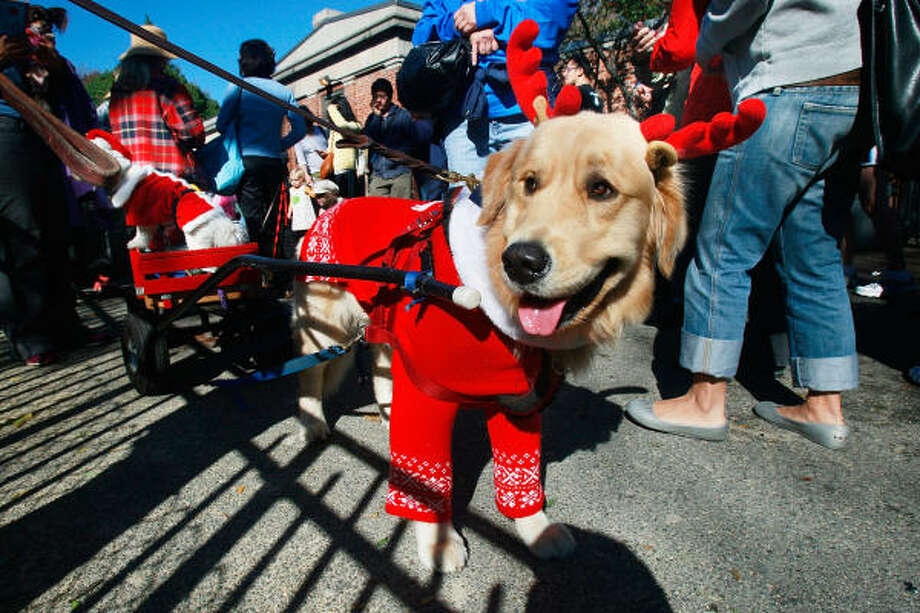 Reindeer at Tompkins Square Halloween Dog Parade. Photo: Mario Tama, Getty Images