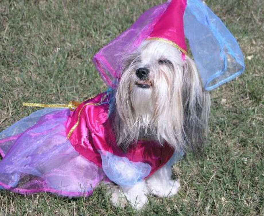 Shari Glover revealed the inner princess of her dog Sophie in 2006. Photo: Fannie Williams, For The Chronicle
