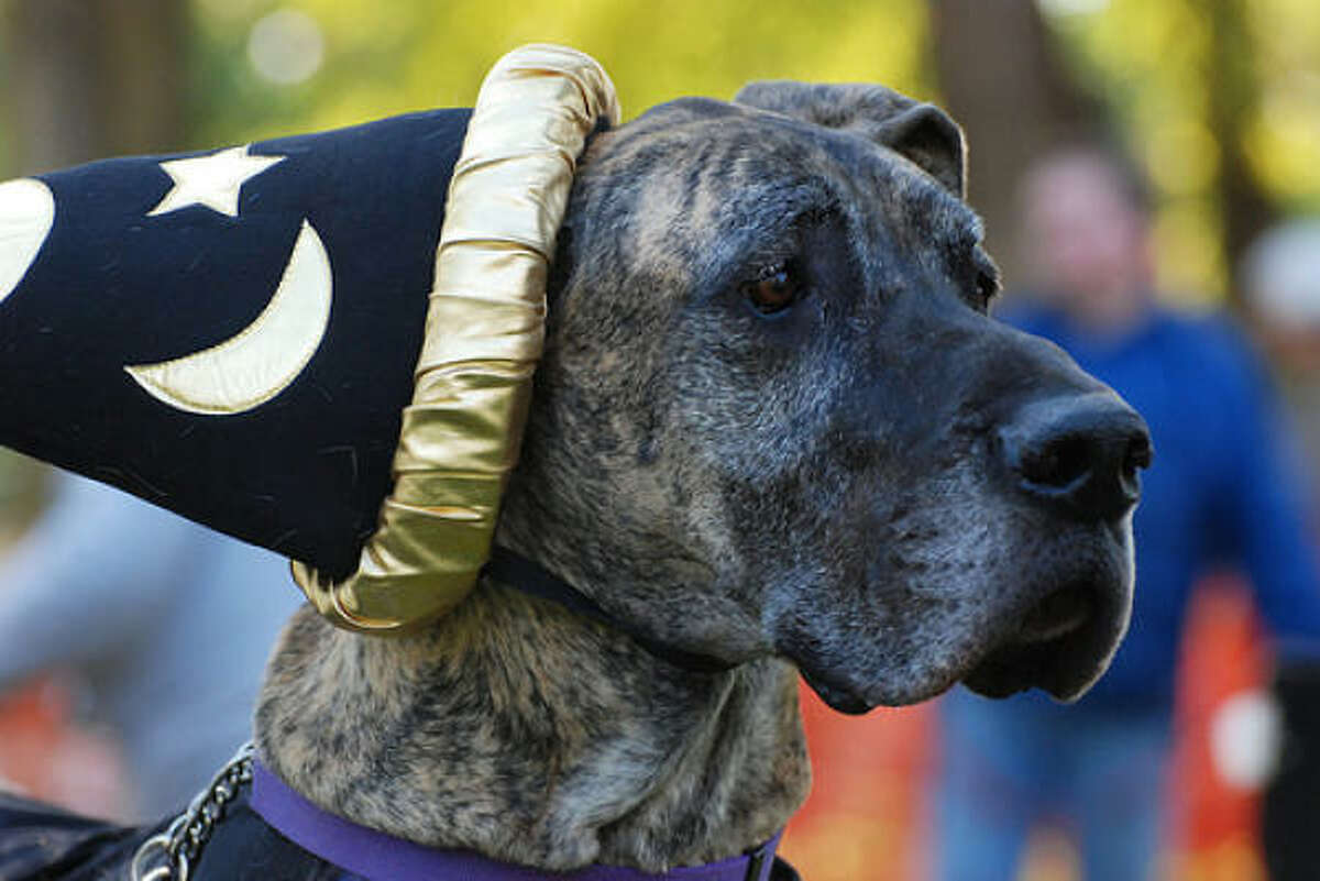 Wizard outfits are so 2007. It's time to upgrade your pup's outfit. Here are some costume cuties.