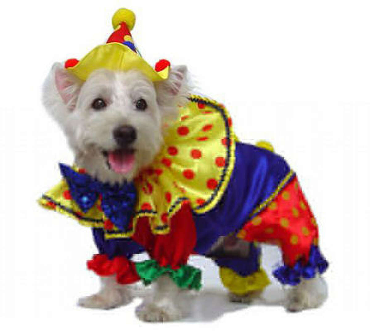 Shiny clown by Puppe Love. $28. Share your pics of dogs in costumes.
