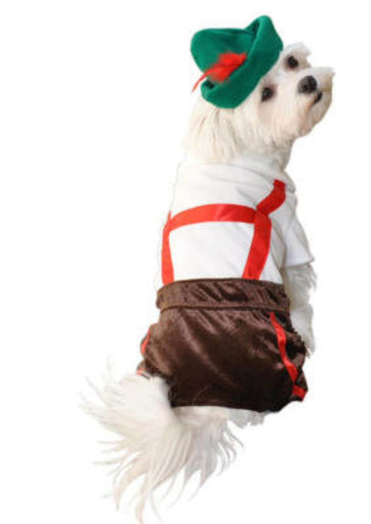 Lederhosen by Anit. $32 Share your pics of dogs in costumes.