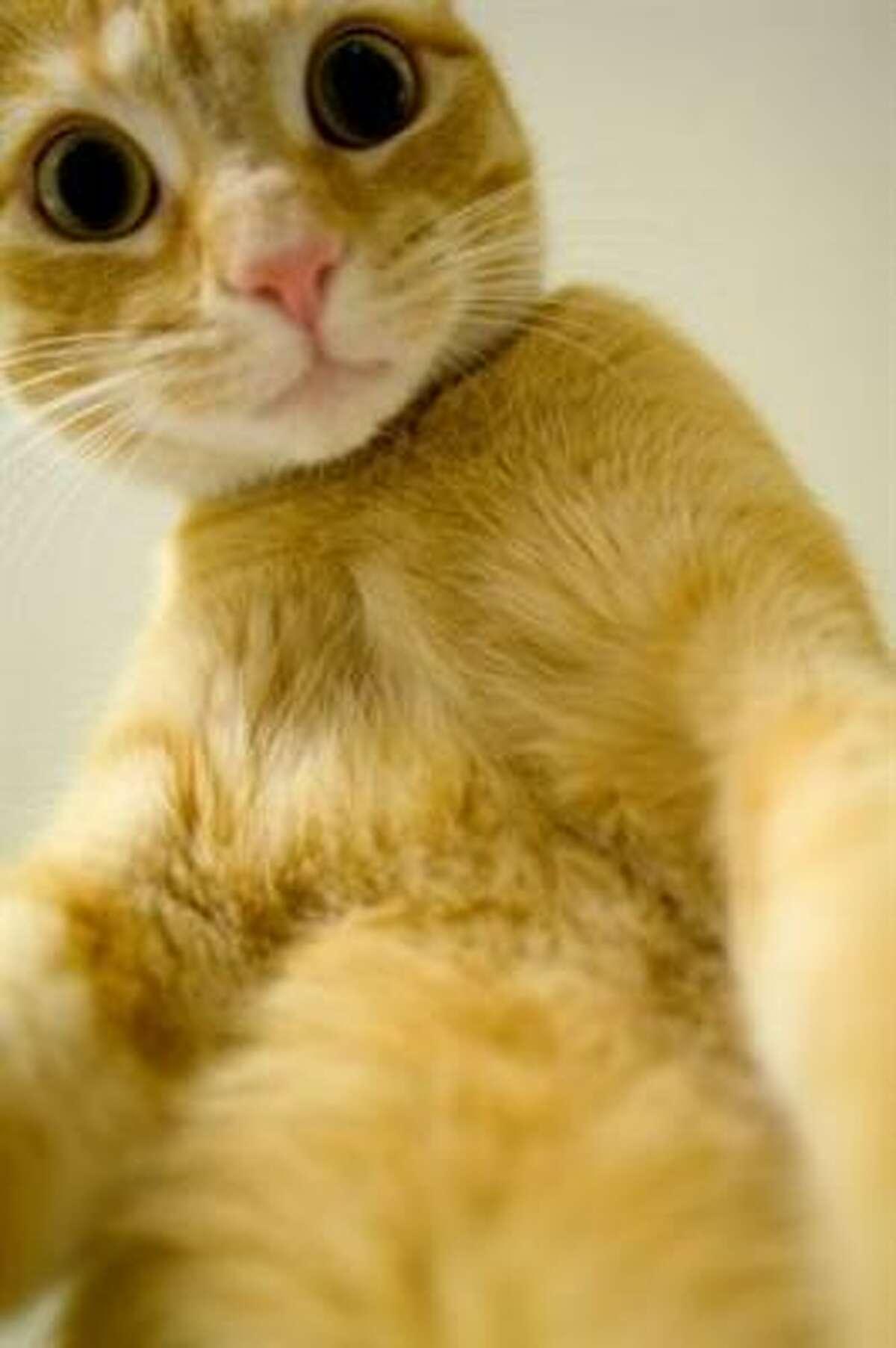 Nachozilla Share your cat pics.