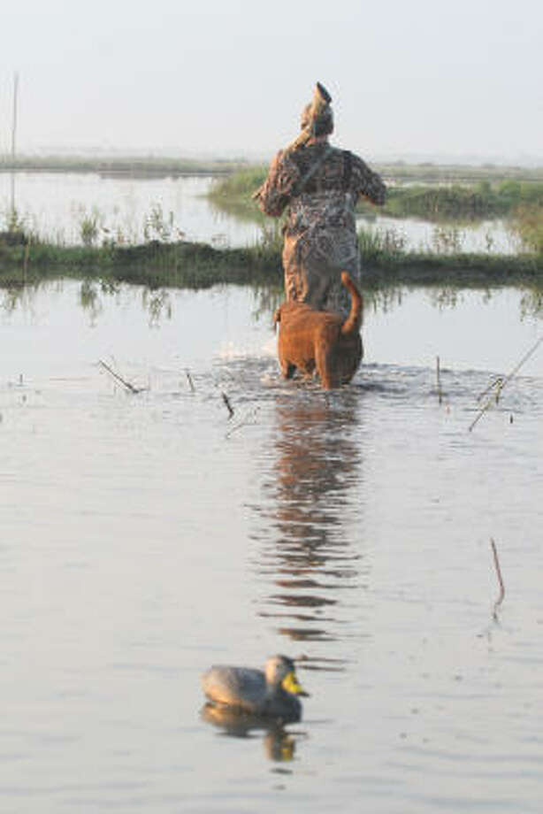Nellie and her partner, Rob Sawyer, slog out of a shallow wetland in Matagorda County after a September morning of teal hunting. Photo: Shannon Tompkins, Chronicle