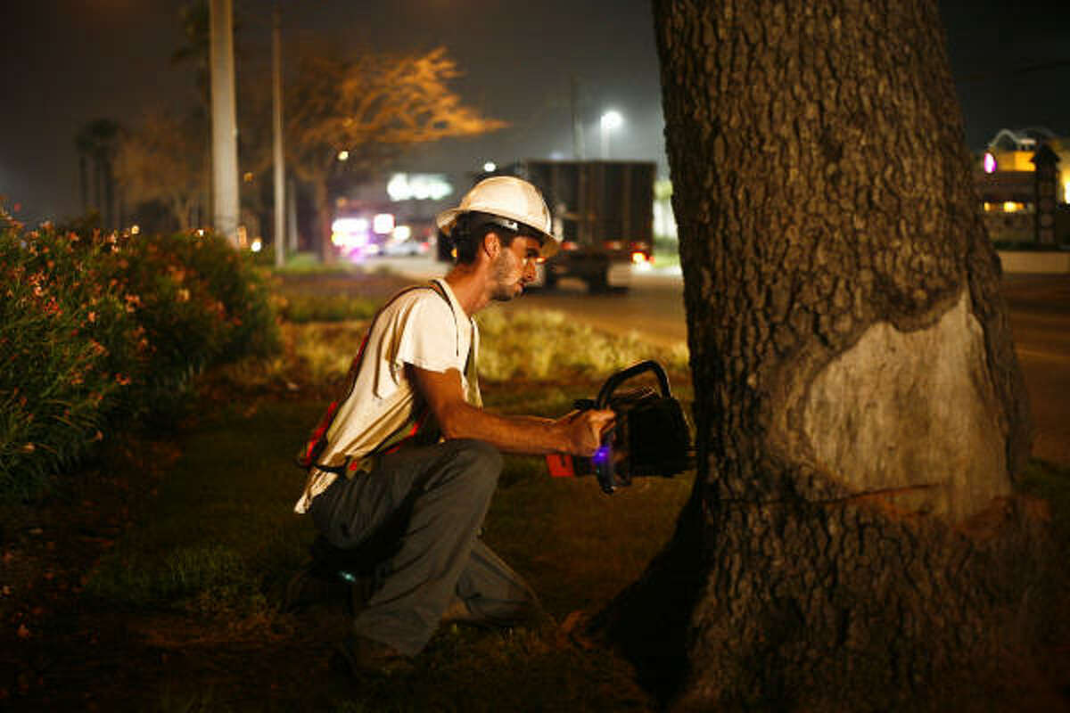 Damian Truxillo cuts down the first historic oak tree on the Broadway St. esplanade in Galveston.