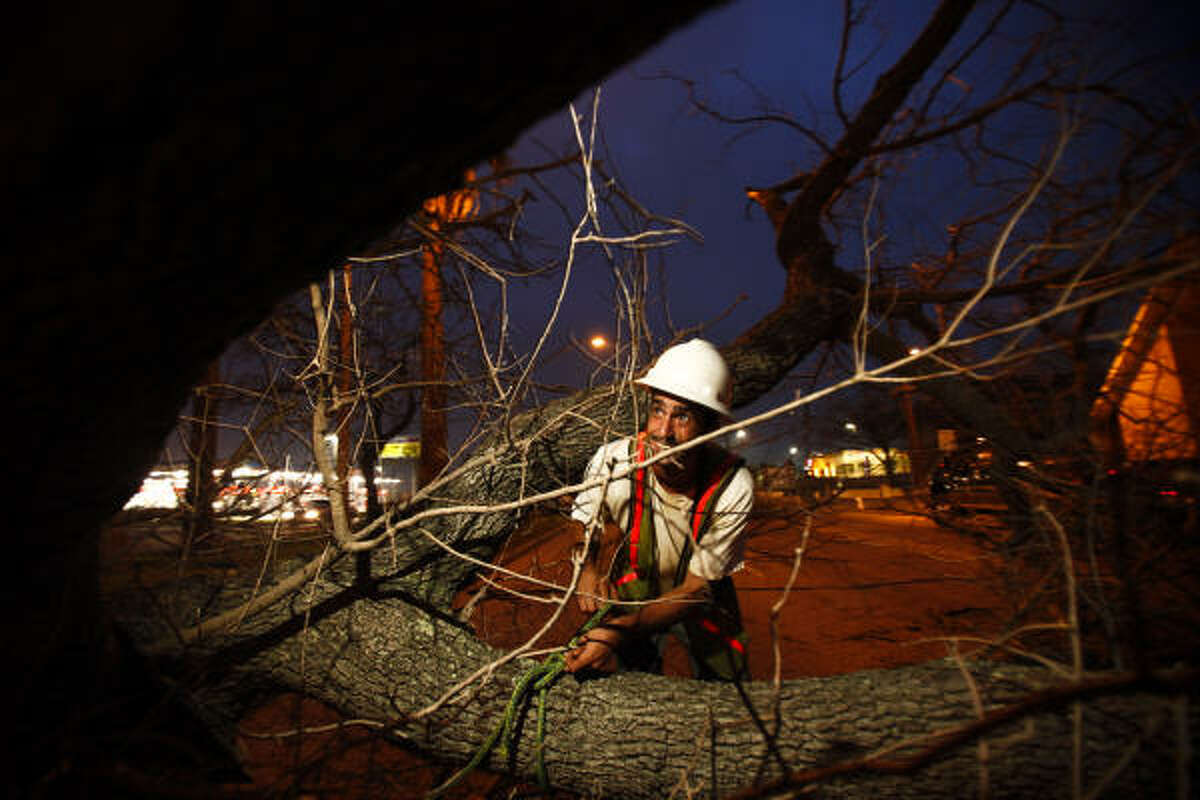 Damian Truxillo works to untie a rope after cutting down the first historic oak tree on the Broadway St. esplanade.