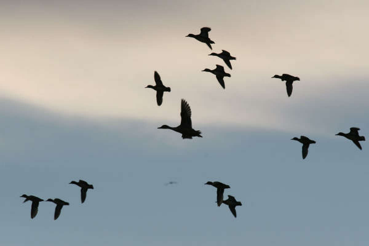September sees a frenzy of wingshooting with the openings of dove season and teal season.