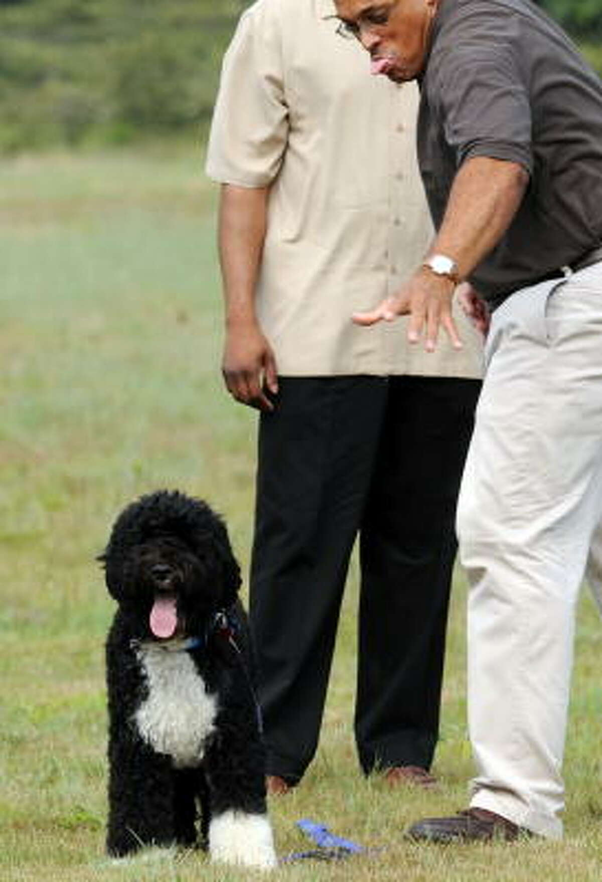 A White House staffer stretches to get hold of Bo as he arrives at the Cape Cod Coast Guard Air Station on Martha's Vineyard.