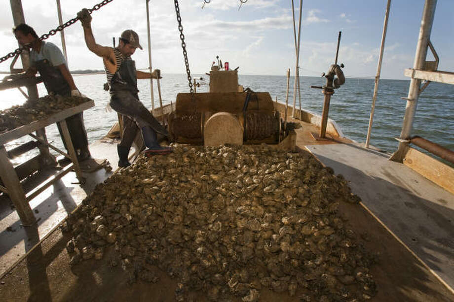 Many of the bay's 114 licensed commercial crabbers lost their traps and their boats to Ike. Most have since refitted, and catches since Ike have been similar to those seen in the past few years. Photo: James Nielsen, Chronicle