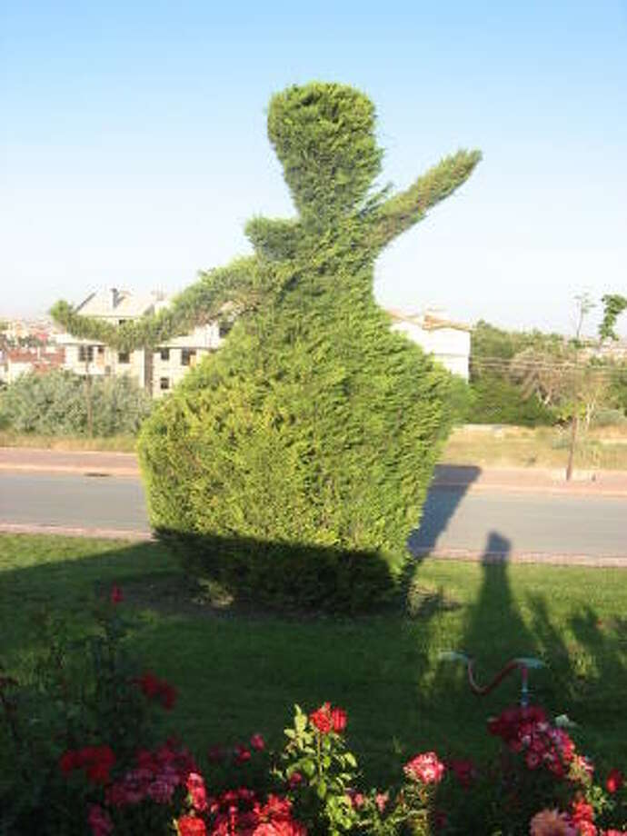 Bushes in Konya, Turkey, are trimmed in the shape of the Whirling Dervishes. Photo: Kristina Herrndobler, Houston Chronicle