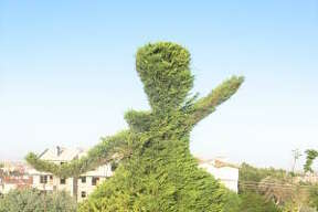 Bushes in Konya, Turkey, are trimmed in the shape of the Whirling Dervishes.