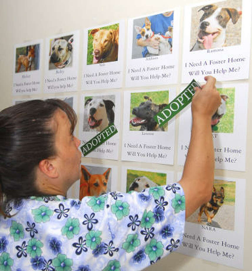 WHITE LINEN PETS:Cooper Animal Clinic's Kathleen Donahue applies a successful adoption label to a photo. The wall of photos displayed pictures of dogs needing permanent homes during an animal rescue Meet-and-Greet at the White Linen Night in the Heights event. Photo: Tony Bullard, For The Chronicle