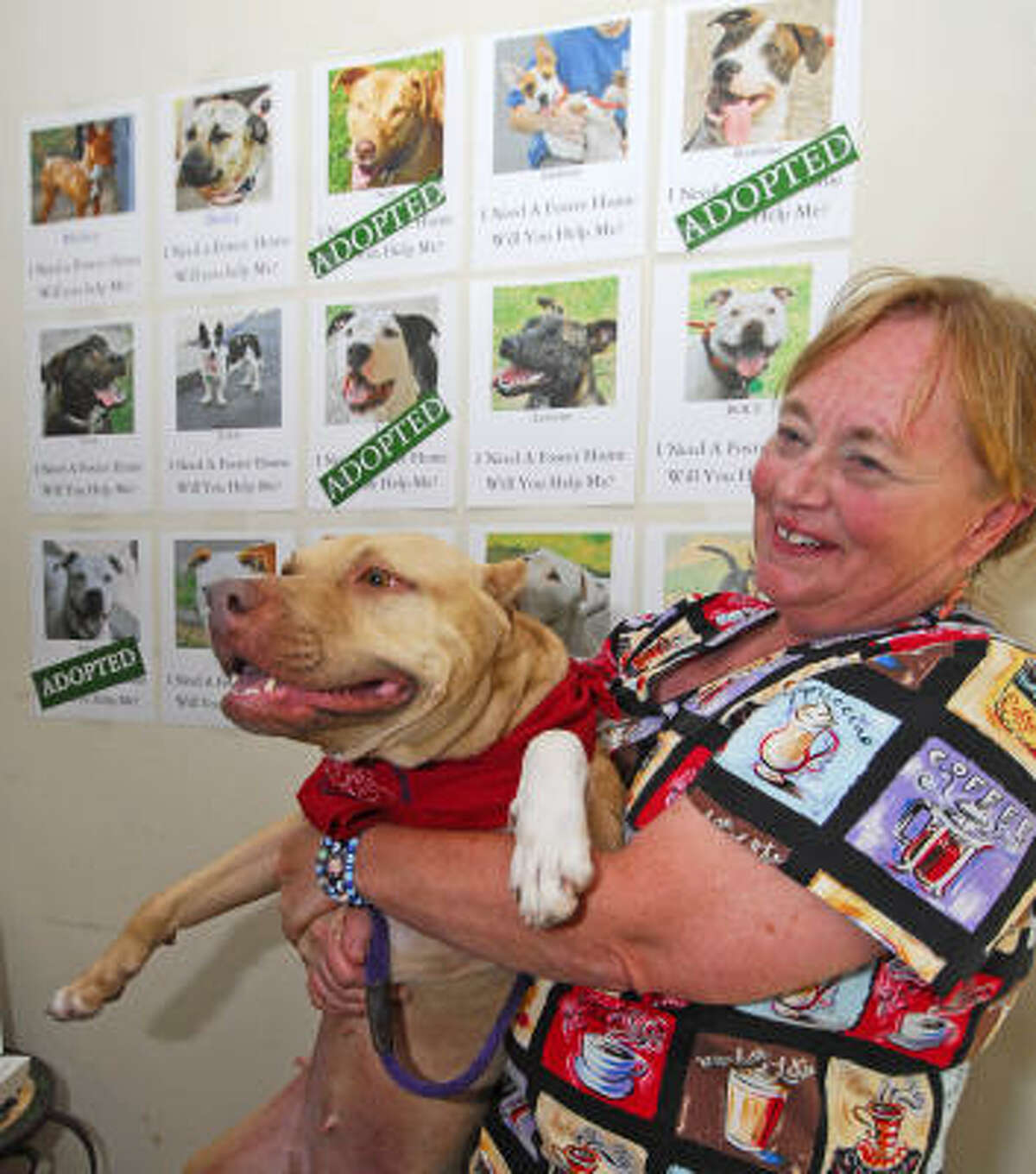Patricia Cooper, Cooper Animal Clinic, holds Violet, a 6-year-old American Staffordshire Terrier and adoption success story, in front of a adoption wall.