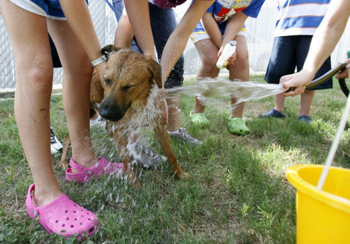 A dog, available for adoption at the SPCA gets a bath from children during the Houston SPCA's Critter Camp in Houston.