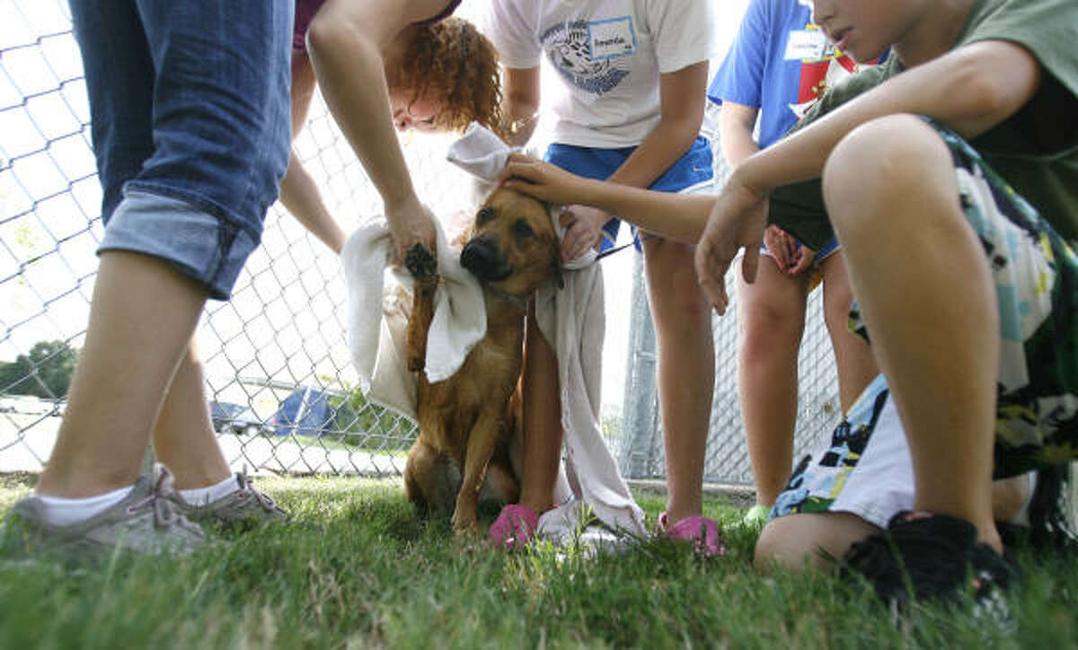 The SPCA's Critter Camp is a week-long camp open to kids 8-11, during the summer. There are four types of camp: Animal Welfare Camp, Animal Kingdom Camp, Dog and Cat, and Tween Career Camp.
