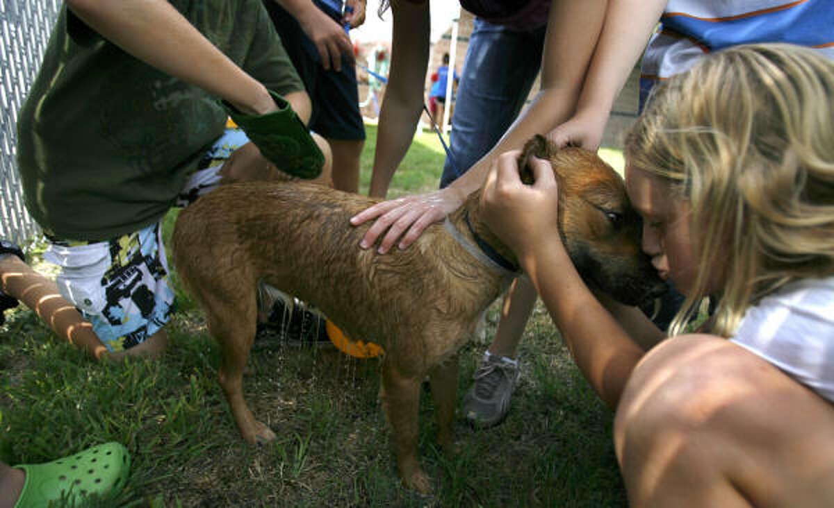Amanda McCloskey, 10, kisses on a dog, available for adoption at the SPCA.