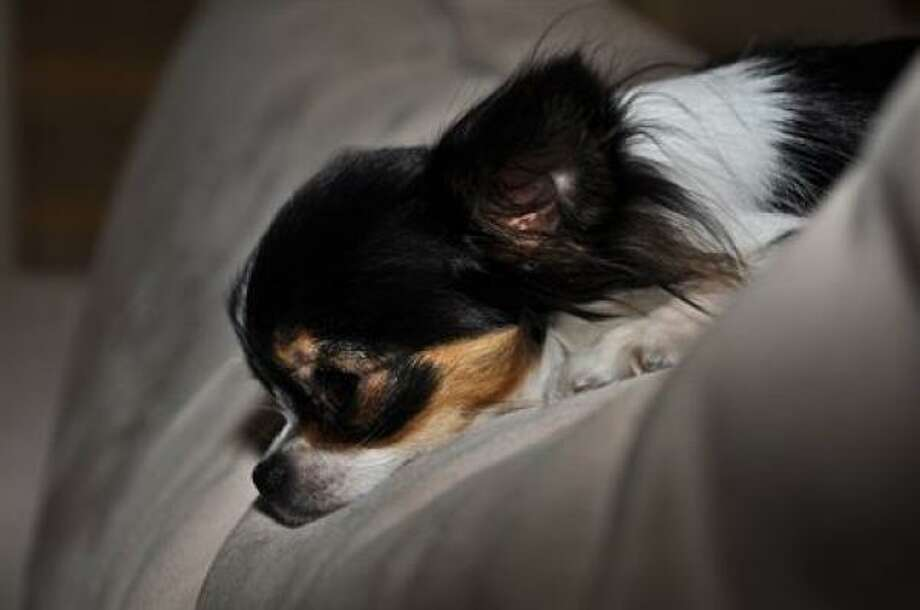 Fiona  Share photos of your pup. Photo: StarrieAngeL, PetsHouston.com