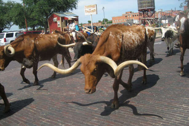 The Fort Worth Stockyards host daily cattle drives at 11:30 a.m. and 4 p.m.