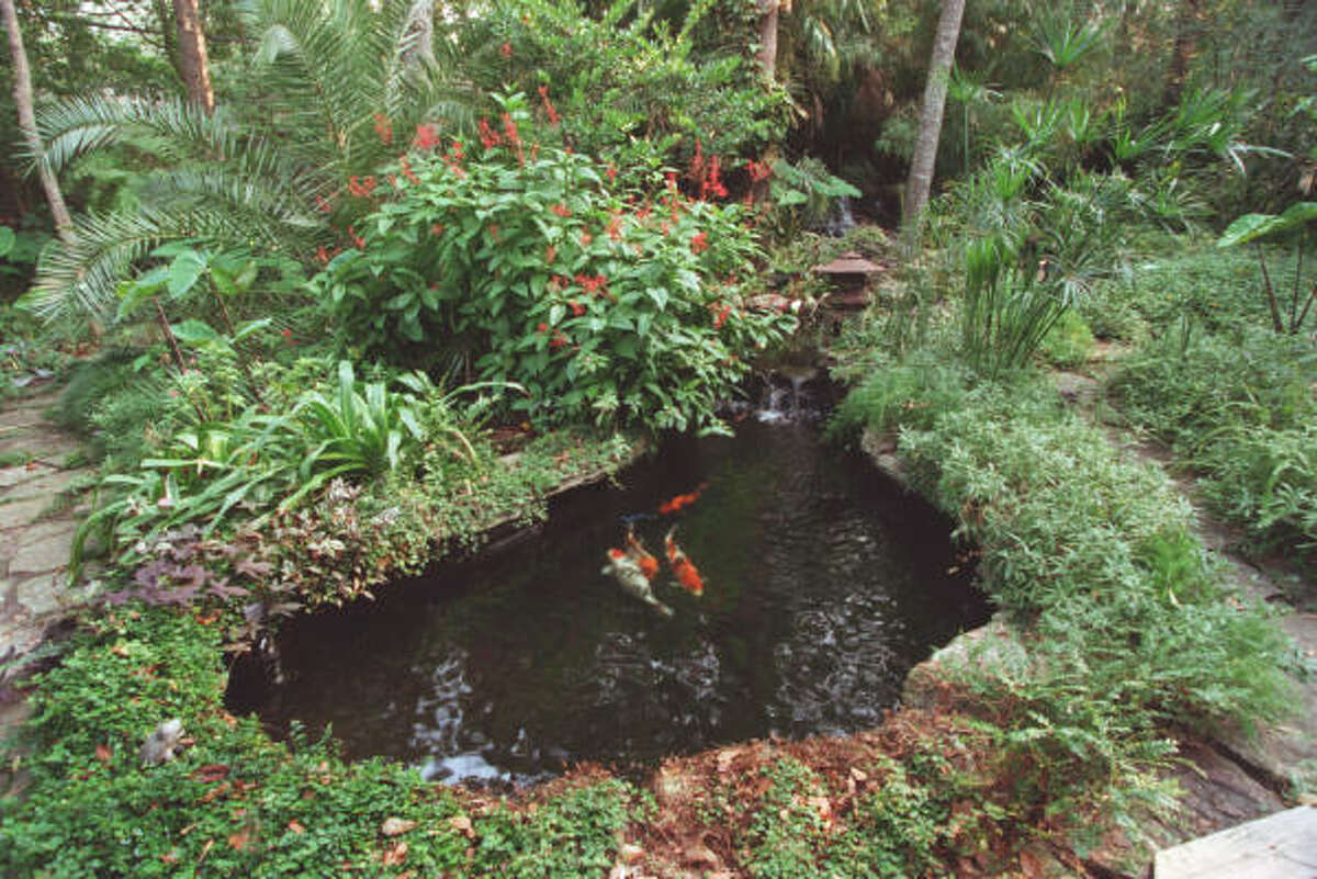 A koi pond and tropical plants are featured in this Houston backyard. More: Set up your backyard pond | Top 10 water garden mistakes | Water features create sense of tranquility | Houston Plant Database | HoustonGrows.com