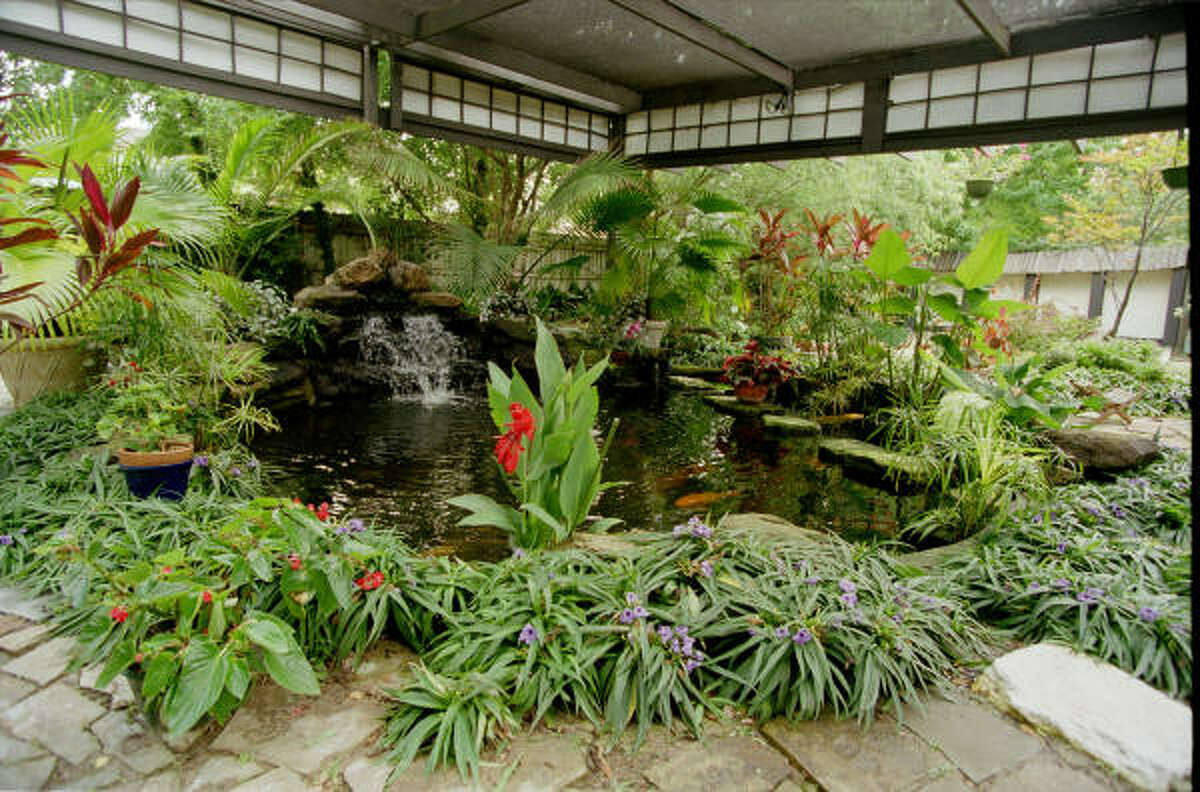 In the Japanese garden of a Houston home, a canopy spans a large koi pond, diffusing direct sun rays that would encourage the growth of algae in the water. More: Set up your backyard pond | Top 10 water garden mistakes | Water features create sense of tranquility | Houston Plant Database | HoustonGrows.com