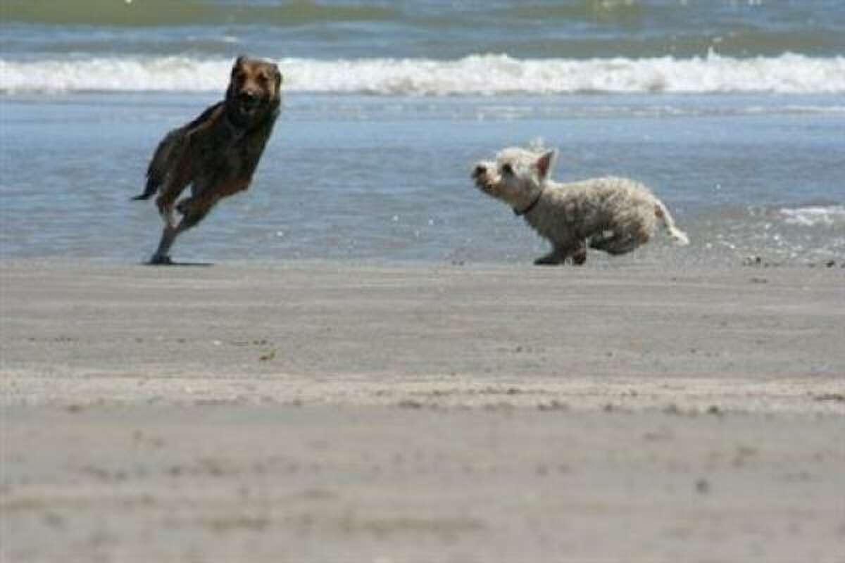 Beach buddies: Shaka and Mirah