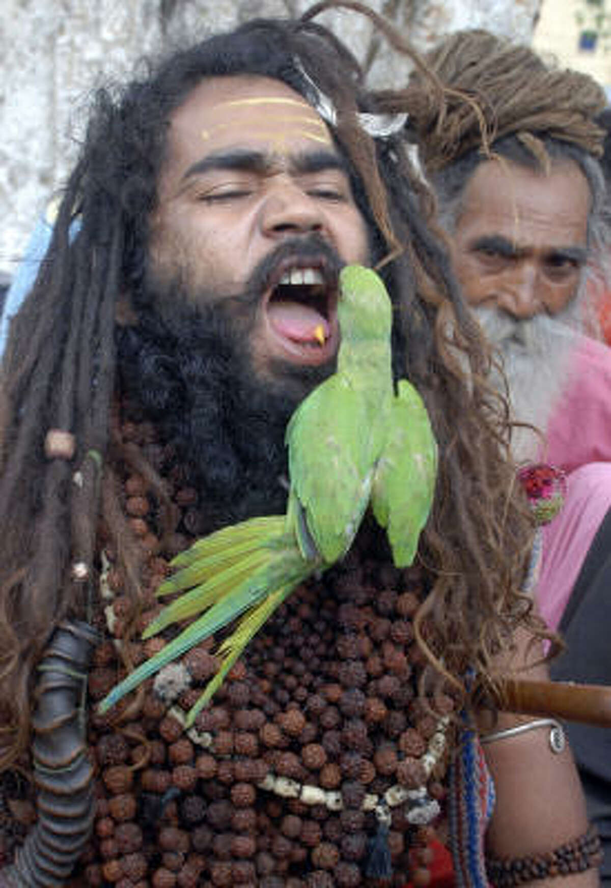 As the parrot feeds from the mouth of a Hindu holy man in Jammu, India, is the bird thinking about selling his red Michael Jackson jacket on eBay or making a nest in that beard?