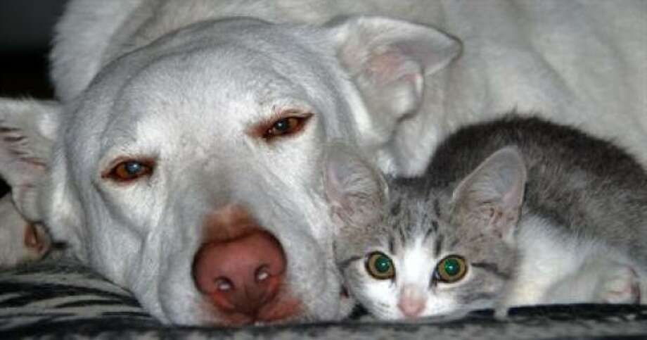 Leo and Tasha make a cute couple Photo: Spoon, PetsHouston.com