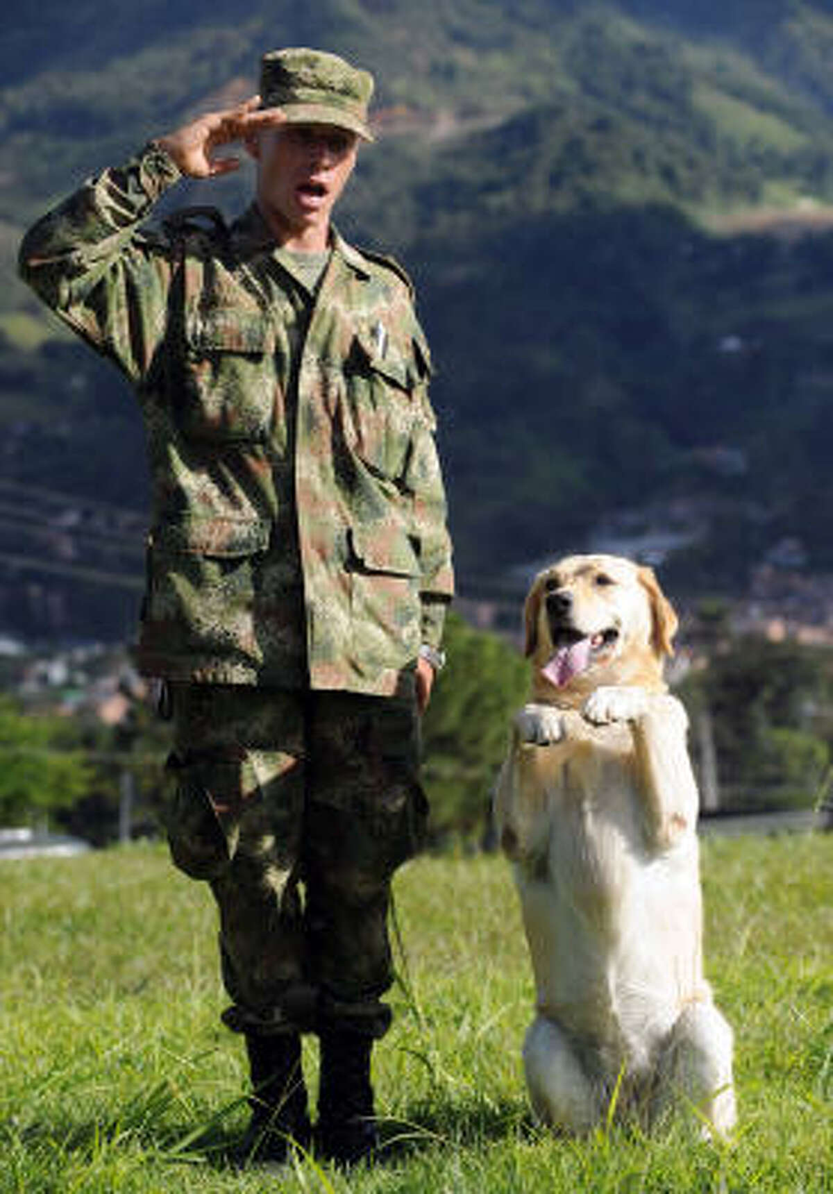 A Colombian soldier and his explosive sniffer dog salute after an exhibition at Pedro Nel Ospina Military Base in Bello, Antioquia Department, Colombia.