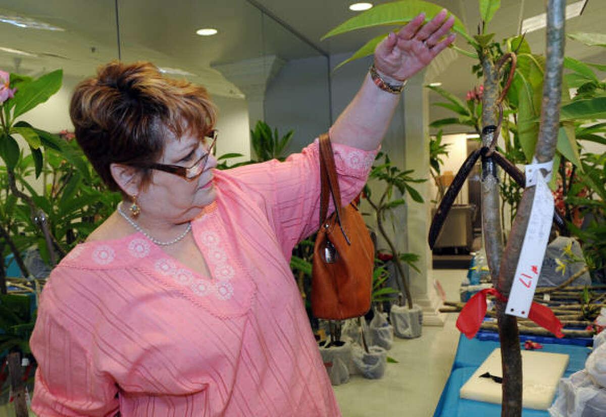 Julie Murray looks at the seedpod of a plumeria.