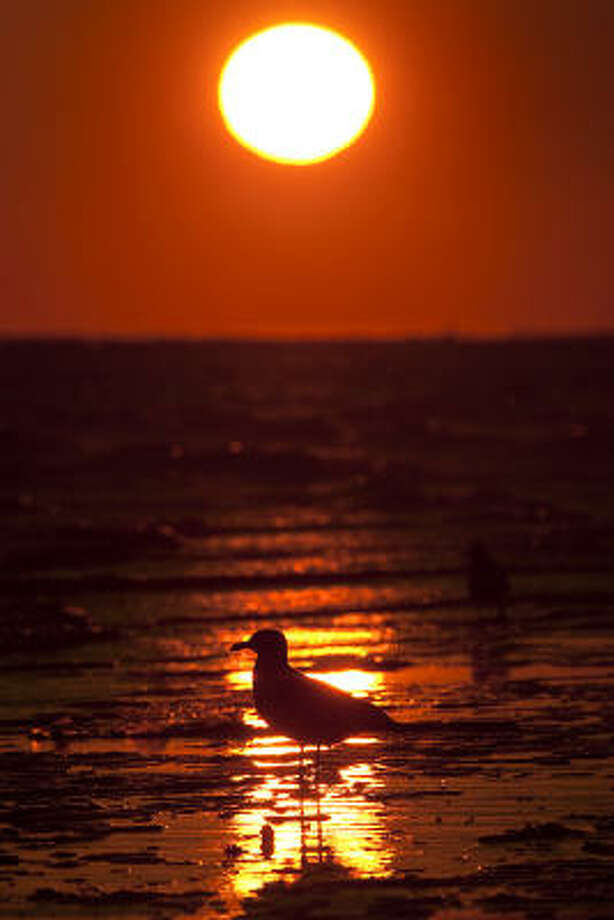 GalvestonThe beach, good food, fantastic views and stunning animal life are just an hour away. Photo: Smiley N. Pool, Houston Chronicle