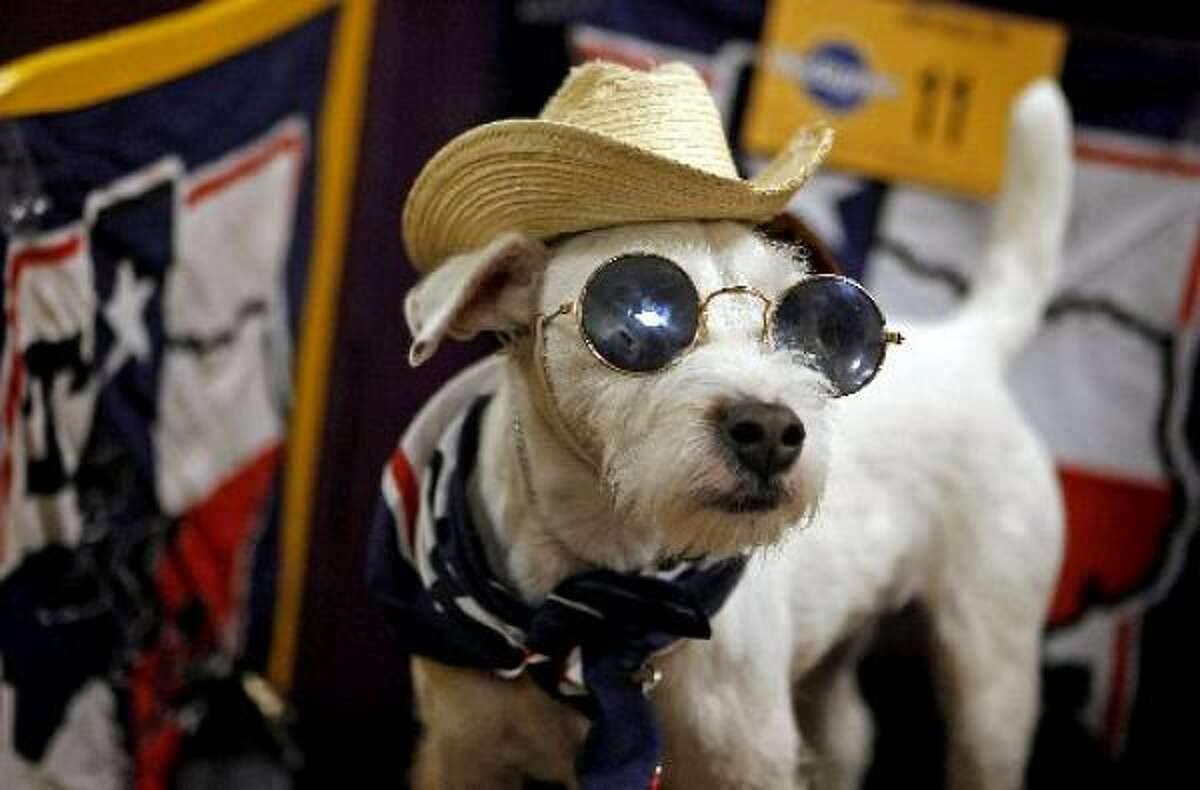 Can you tell Pogo is a Texas dog visiting New York? He was at the 2008 Westminster Kennel Club Show.